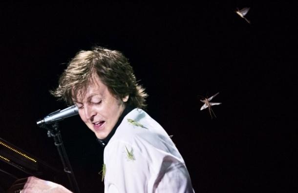 Прямо во время концерта в Бразилии на Пола Маккартни напала саранча