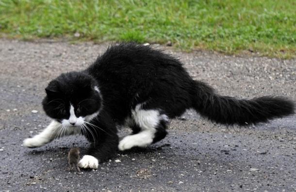 Кошка ездила под капотом автомобиля своей хозяйки две недели