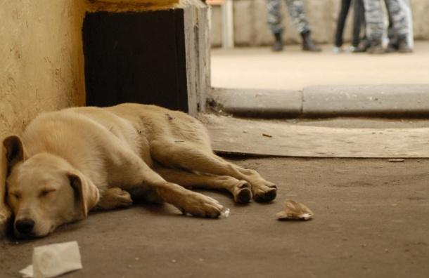 Собак в подмосковном  Селятино убивали на глазах жителей