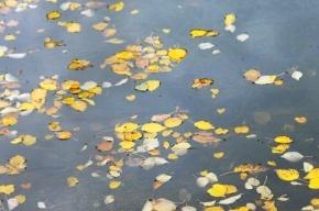 В Ленобласти мужчине отрубили руки и ноги, засунули в мешок и выкинули в пруд