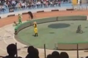 Цирковой медведь разорвал обезьяну во время представления на глазах у детей