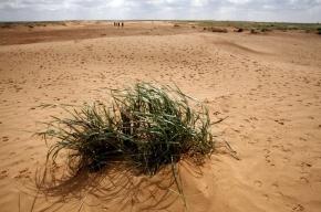 Сорок пропавших школьников из Петербурга в израильской пустыне искала полиция