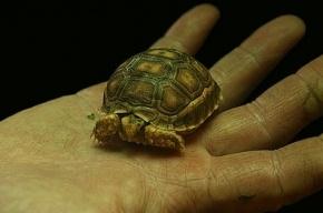 В Подмосковье младенца лечат от бешенства после нападения черепахи