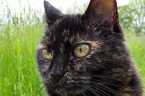 Под Всеволожском женщина спасала с дерева кошку, но упала и разбилась насмерть
