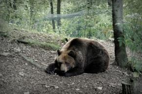 На Камчатке медведи раскопали могилу на кладбище и съели труп