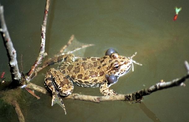 Москвичам предлагают послушать пение земноводных в  пруду парка «Кузьминки-Люблино»