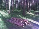 Фоторепортаж: «Мусор в Сосновском лесопарке»