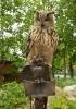 Памятник сове в Зоопарке: Фоторепортаж