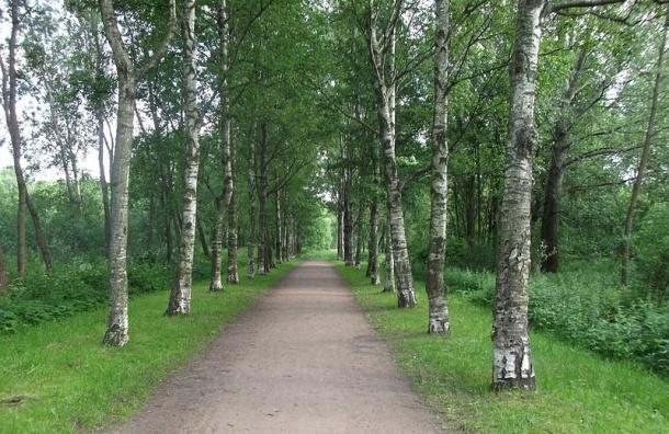 Четырехлетнюю девочку забыли в Полежаевском парке на юго-западе Петербурга