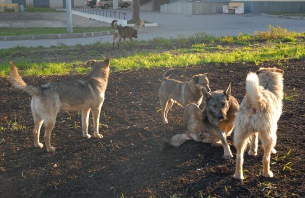 Более полусотни собачьих трупов обнаружено в Подмосковье