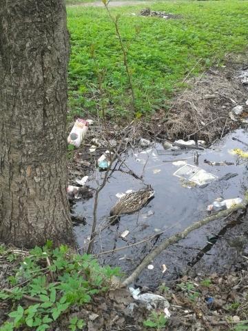 Несчастная утка в Удельном парке: Фото