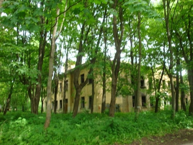 Мусор в Дворцовом лесопарке: Фото