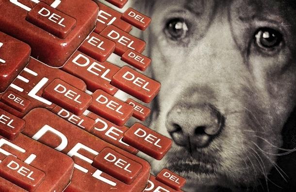 Закон против жестокого обращения с животными разрешит убивать бездомных собак