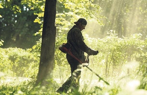 Газон и пыль. Чем опасна стрижка газонов в Москве?