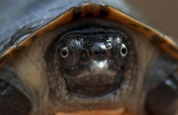 Черепахам запретили входить в нью-йоркский аэропорт Кеннеди