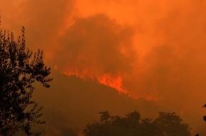 В Ленобласти ожидают пожаров из-за 30-градусной жары
