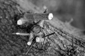 На 4-ой Советской вандалы изувечили деревья, высаженные Шевчуком и Шемякиным