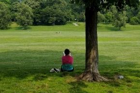 В парке на Елагином острове открывается читальный зал под открытым небом