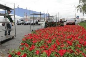 На Васильевском острове высадили тысячи цветов к Экономическому форуму