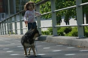 Депутаты Петербурга решили не запрещать 14-летним подросткам выгуливать собак