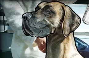 Стая собак терроризирует жителей проспекта Мориса Тореза