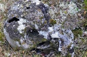 Петербургский грибник нашел в лесу человеческий череп