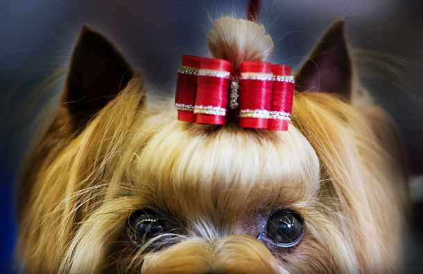 В Англии собаки могут отдохнуть за 75 тысяч долларов