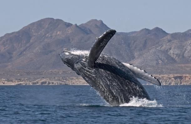 23 июля отмечается Всемирный день китов и дельфинов