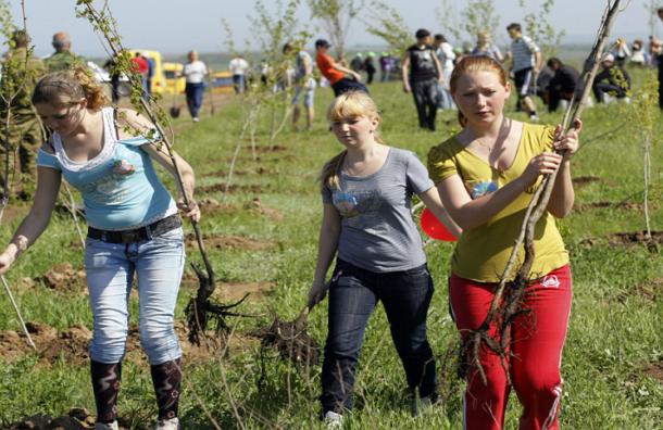 Около миллиона деревьев будет высажено в московских дворах за 5-10 лет