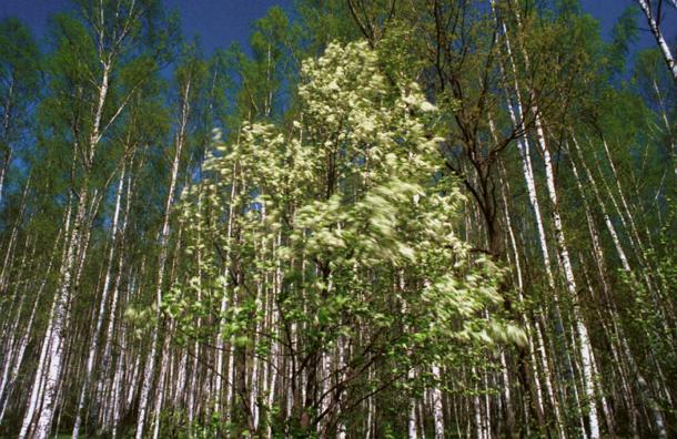 Власти Подмосковья выделят 10 млн рублей на развитие школьных лесничеств