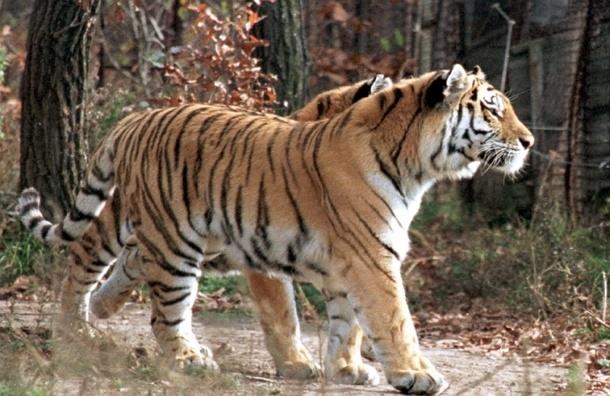 В России решили сажать за браконьерство