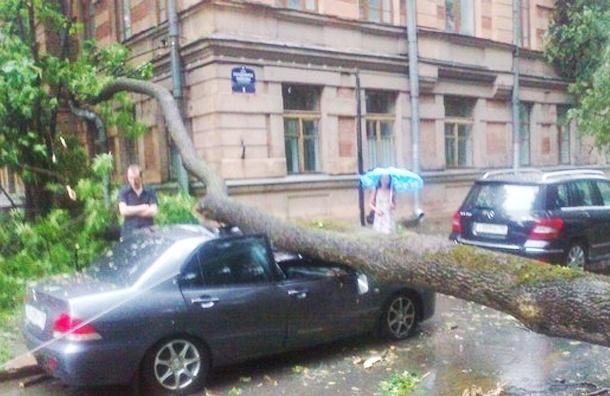 В Петербурге сильный ветер валит деревья на автомобили
