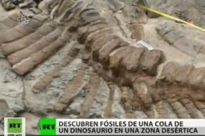 В Мексике обнаружен хорошо сохранившийся хвост динозавра