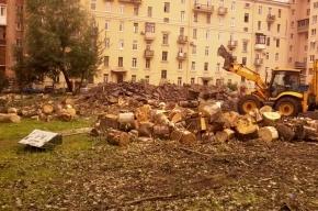 На Васильевском острове вырубили сквер, не предупредив жителей