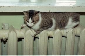 На улице Подвойского в Петербурге включили отопление