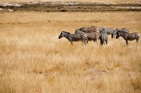 Турист из Петербурга впал в кому во время охоты в Намибии