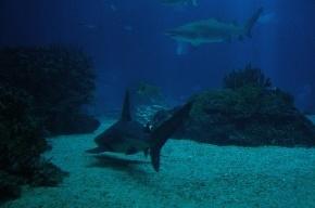 Каким будет новый океанариум в Петербурге, рассказали в Смольном