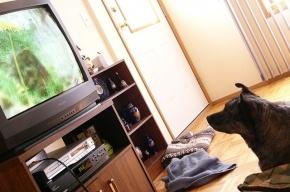 Первый в США телеканал для одиноких собак начнет вещание в августе