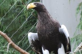 В Ленинградском зоопарке неизвестные попытались выпустить из клеток хищных птиц