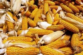 У метро «Улица Дыбенко» злоумышленник отобрал у женщины тележку с кукурузой
