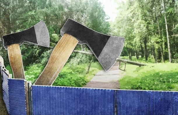 В Кировском районе срубят 100 деревьев, и запрет — не помеха