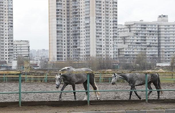 Лошади в городе. Сколько стоит поучиться верховой езде в Москве