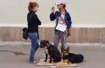 Попрошайки с животными на улицах Москвы: Фоторепортаж