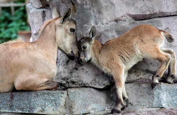 В Московском зоопарке проложат маршруты