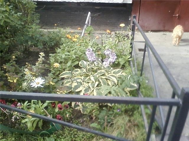 Цветник на Суздальском: Фото