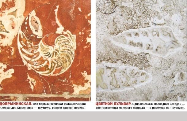 Метро донашей эры. Вмраморной облицовке подземки можно найти древние окаменелости