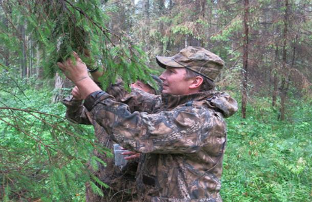 Жуков-убийц массово запустят в леса Подмосковья