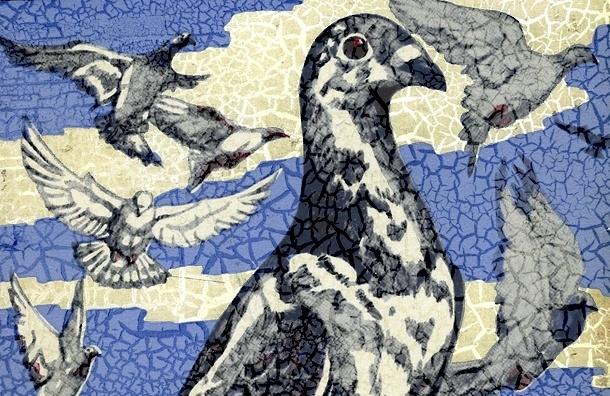 В Петербурге, как и в Москве, массово погибают голуби