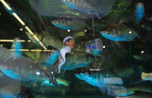 Литовец рыбачил прямо в рыбном магазине