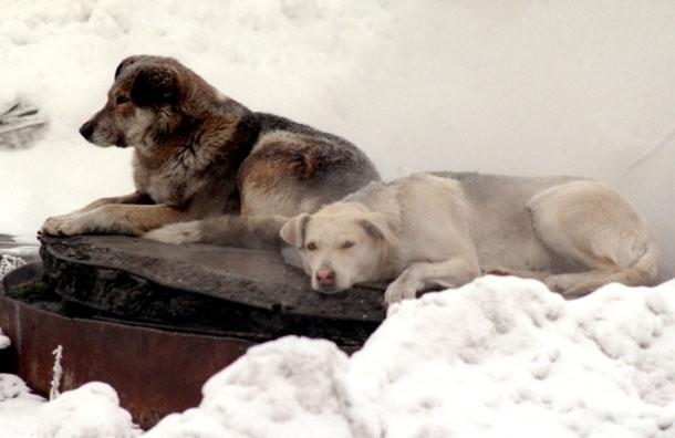 Адреса приютов для животных, которые действительно работают и нуждаются в помощи
